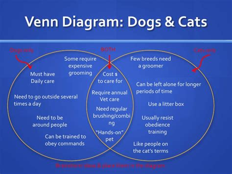 compare and contrast cats and dogs venn diagram week 8 comparison contrast essay