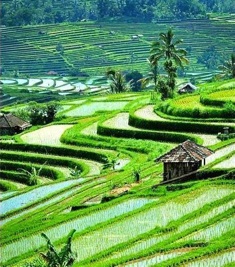 wallpaper pemandangan alam hijau kumpulan gambar pemandangan terindah di dunia