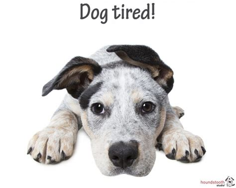 depression in dogs winter depression in dogs dogslife breeds magazine