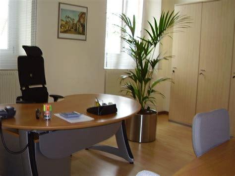 plante bureau am 233 nagement de plantes d int 233 rieur pour le bureau de travail