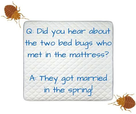 bed jokes bed bug joke bugpun insects fridaybugfun fun bug