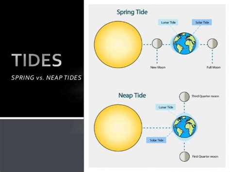spring tides the moon and tides spring vs neap tides