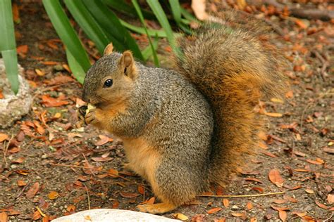 things you really need to know about squirrel feeding