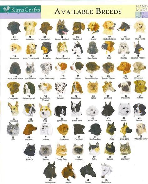 theme names for dogs theme of the day all dogs breeds with pictures and name