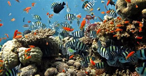 imagenes reales del fondo del mar fotografias de fondos de mar fotografias y fotos para