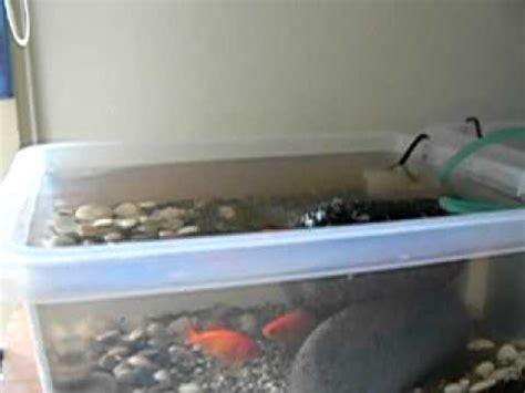 vasca pesce rosso pesci mov