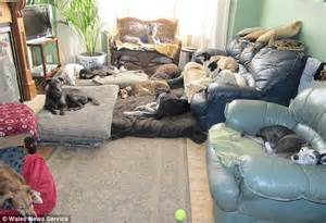 dogs sleeping in bedroom one woman and her dog pack pensioner 67 shares her home