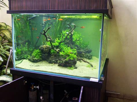 membuat hiasan aquascape aquarium minimalis dengan hiasan tanaman hijau dibagian