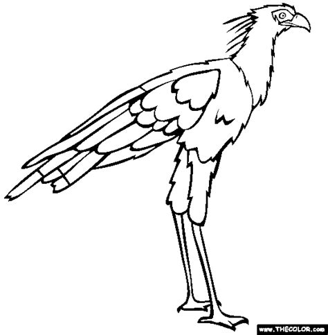 jungle birds coloring pages bird coloring pages