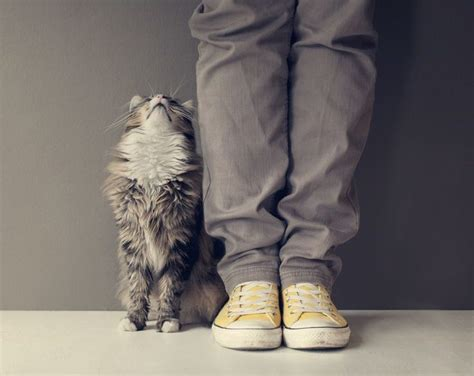 how to your to like cats how to get your cat to like you more