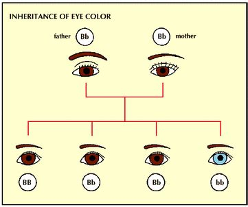 who has the dominant gene for eye color dominant or recessive heredity
