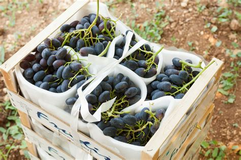 uva nera da tavola uva rossa da tavola frudis