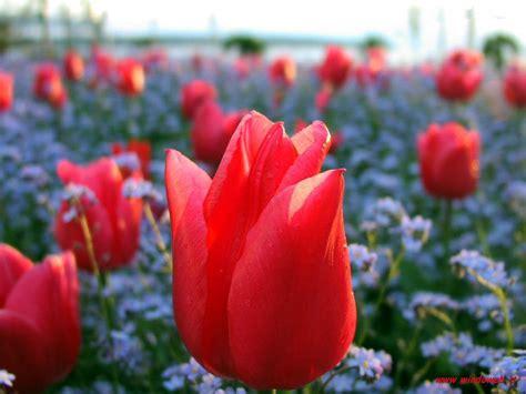 foto fiori coloratissimi immagini fiori coloratissimi