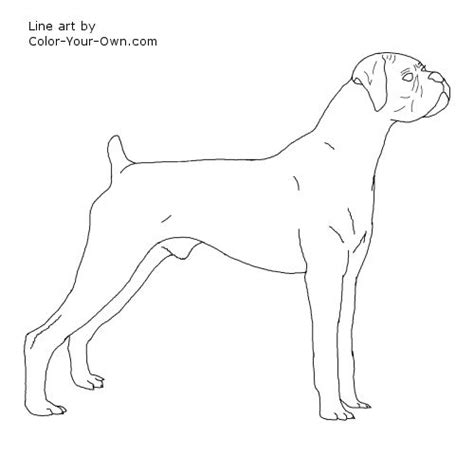Free Dog Boxers Coloring Pages Boxer Coloring Pages