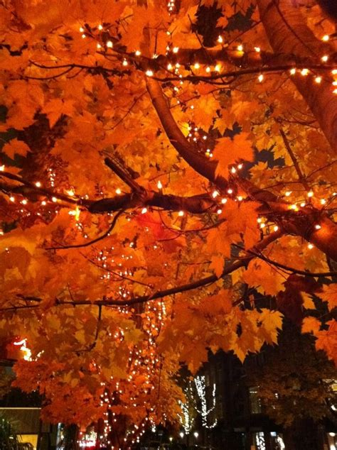 22 best images about fall trees this time of year
