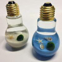 Medium Japanese Mossball 1000 ideas about marimo on water terrarium