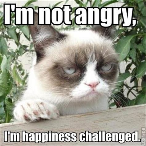 Funny Angry Cat Meme - funny cat pictures make2fun