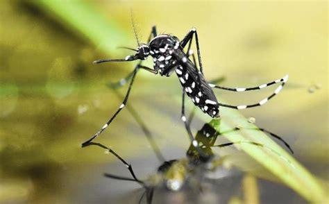 ayat tentang nyamuk  al quran saintis temui