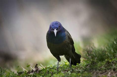 Birds Of The World 365 Days angry bird