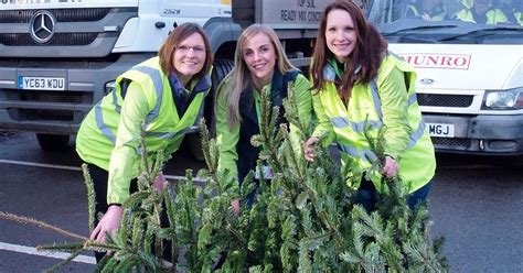 how to recycle your christmas tree and help charity