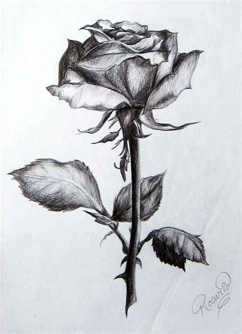 imagenes a lapiz de rosas image gallery lapiz dibujo flor rosa