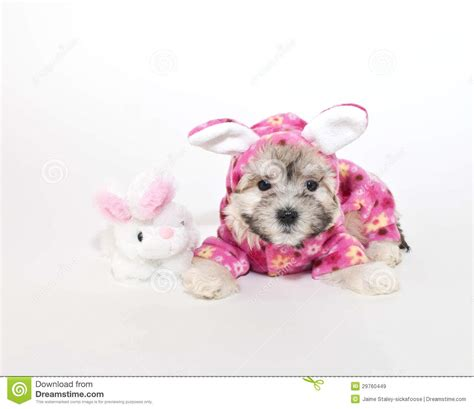puppy bedtime puppy bedtime royalty free stock images image 29760449