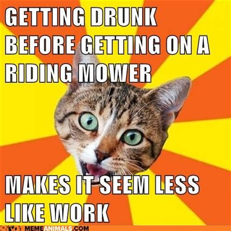 Funny Advice Memes - 27 best images about bad advice cat don t listen to him