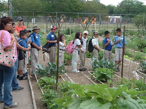 The Gardens Tamu by 2014 Children S Vegetable Garden Program In San Antonio Accepting Applications Agrilife