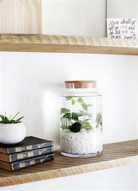 diy indoor water garden  merrythought