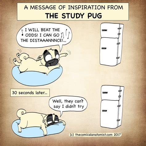 study pug study pug 2 the comical anatomist