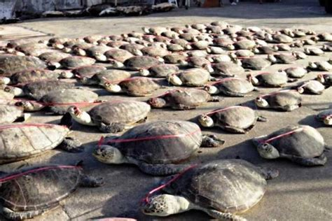 alaska fishing boat massacre hearing of chinese poachers delayed over language