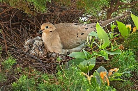 they re not done yet learn the bird nesting basics of
