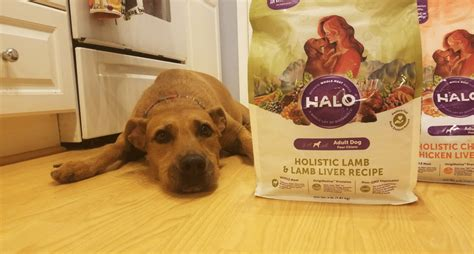 halo puppy food halo food is put to the taste test