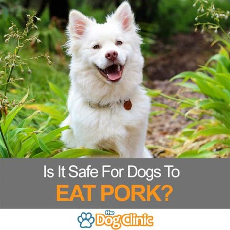 is pork for dogs is pork bad for dogs the clinic