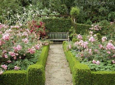 landscaping design with roses wilson rose garden