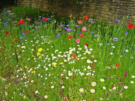 Wild Flowers In The Garden David Bevan Biddenham Flowers In The Garden