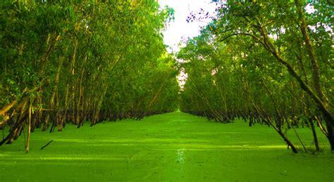 consolato thailandese torino foresta melaleuca di tra su respiro di natura