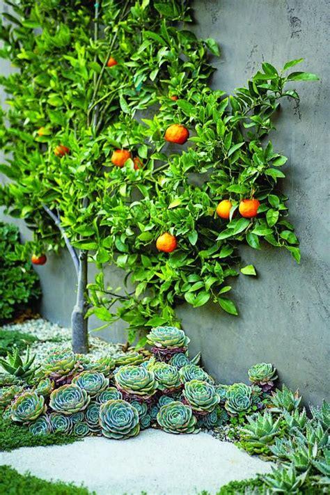 best 25 espalier fruit trees ideas on pinterest garden