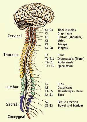c section muscle damage 691 best ouch my lower back hurts images on pinterest