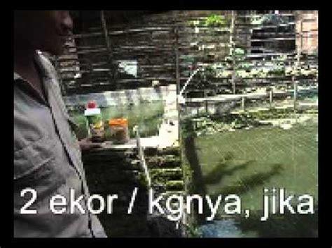 Pakan Ikan Lele Fengli budidaya lele viterna poc nasa dan hormonik doovi