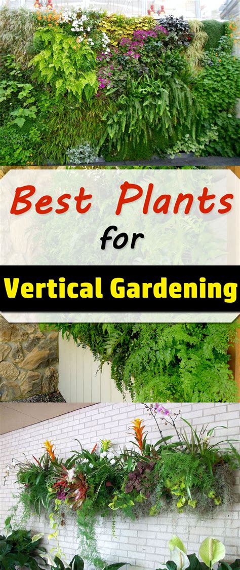best plants for vertical garden vertical garden plants