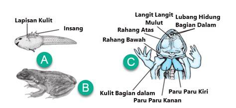 alat pernapasan pada hewan mikirbae