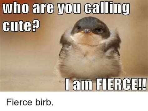 Who Are You Meme - who are you calling cute i am fierce fierce birb meme