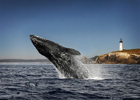 coos bay oregon for whale watching take me there now