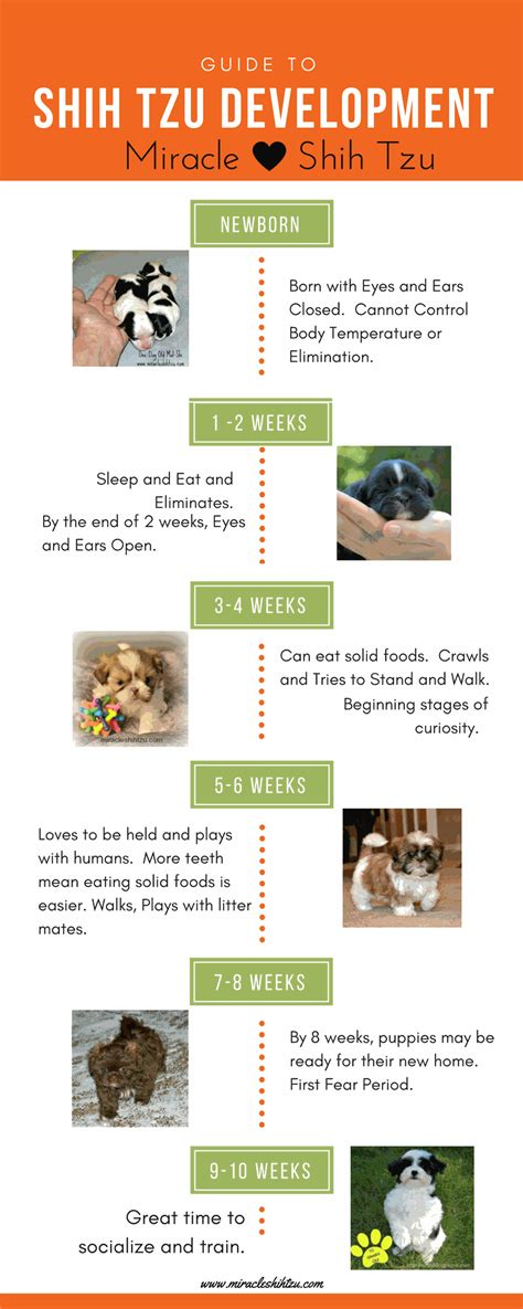 puppy milestones shih tzu puppy growth chart images free any chart exles
