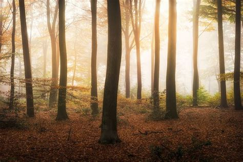 10 photos that reveal the magic of dutch forests bored
