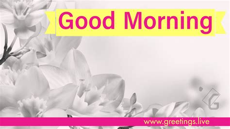 greetingslivefree daily  pictures festival gif images  good morning gif
