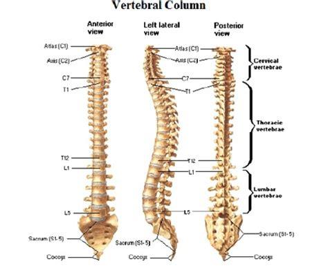 spinal stenosis diagram spinal stenosis diagram biopsy diagram elsavadorla