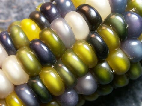colorful corn 21 inch waist day at work