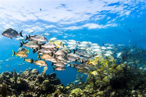 dive aruba scuba diving in aruba resorts packages caradonna